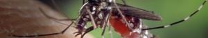 mosquito_slider