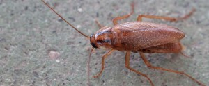 eliminar cucarachas valencia
