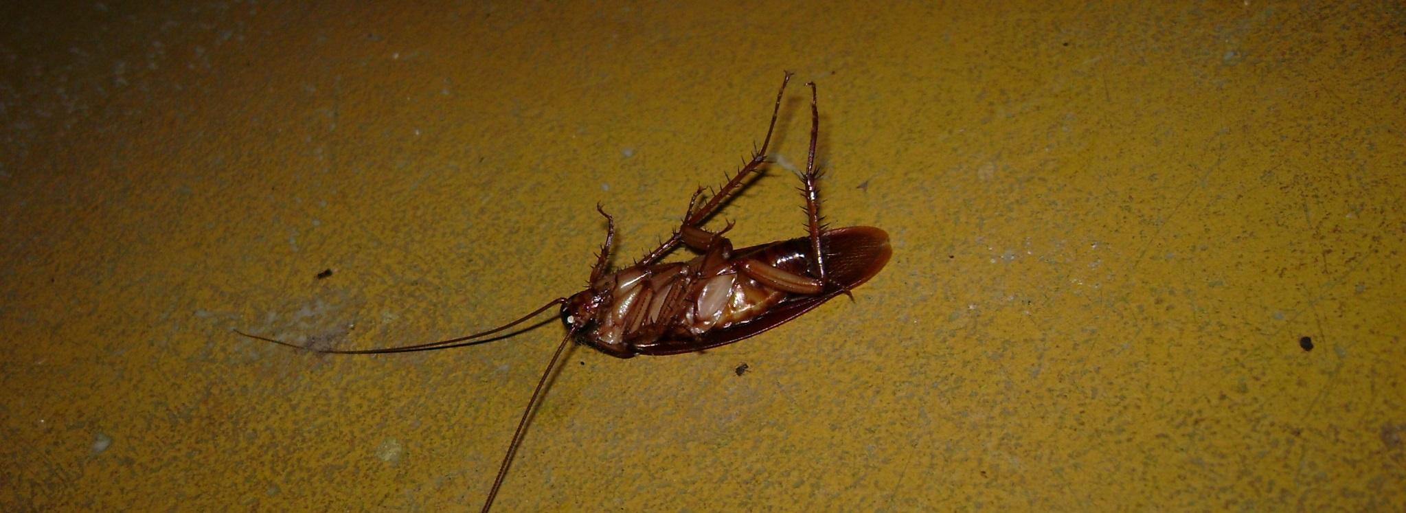 Eliminar Cucaracha